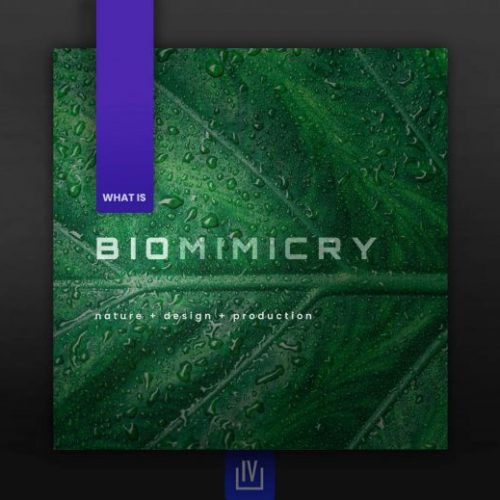 What is Biomimicry
