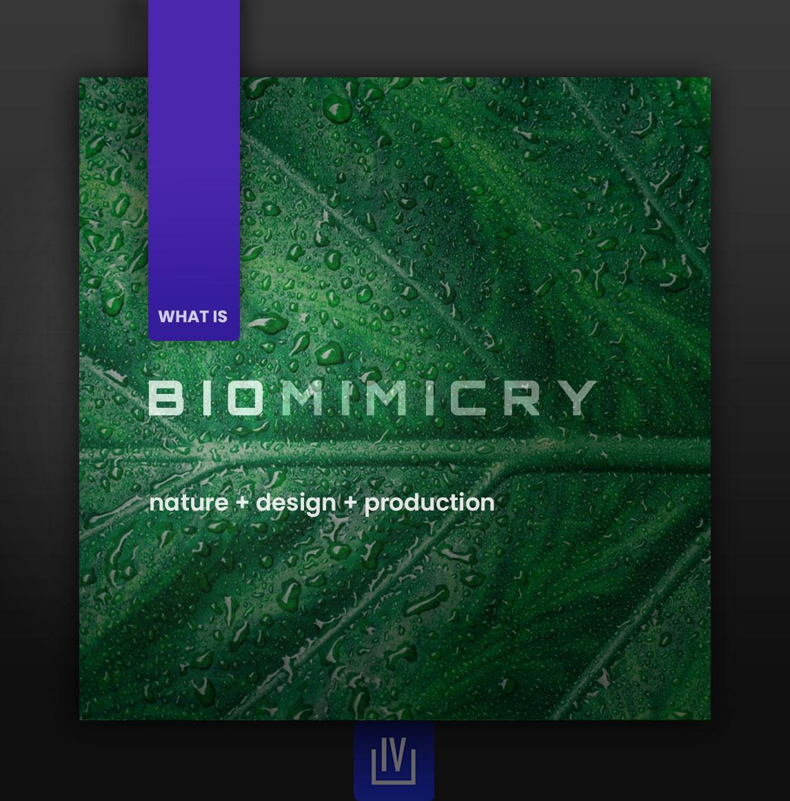 Biomimicry Cover. Graphic Design Art by Anna Croft